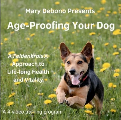 Age Proof Your Dog